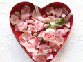 Fresh roses and rose petals in heart box pink flowers a red shaped Royalty Free Stock Image