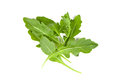 Fresh rucola leaves isolated on white background Stock Photo
