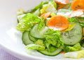 Fresh salad with cucumber Stock Images