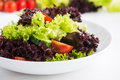Fresh salad with green and purple lettuce, tomatoes and cucumbers on white wooden background close up. Royalty Free Stock Photo