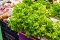 Fresh salad green selling in the supermarket Royalty Free Stock Image