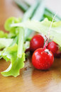 Fresh salad leaves and red radish on a table green Royalty Free Stock Image