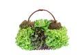 Fresh salad vegetable in baske Royalty Free Stock Photo