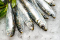 Fresh sardines on ice at the market Royalty Free Stock Photos