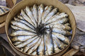 Fresh sardines image shows arranged in a circle Royalty Free Stock Image