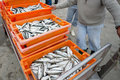 Fresh sardines in orange  box Stock Photos