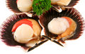 Fresh Scallops Stock Images