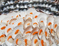 Fresh scallops and fish fillets on market stall Royalty Free Stock Photo