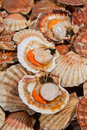 Fresh scallops at fish market Royalty Free Stock Image
