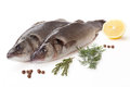 Fresh sea bass Stock Photography
