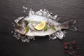 Fresh sea bream cooling on crushed ice
