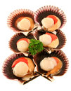 Fresh Sea Scallops Stock Photo