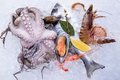 Fresh seafood on ice close up Royalty Free Stock Photography