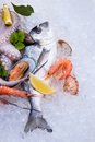 Fresh seafood on ice close up Stock Image