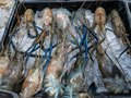 Fresh seafood including Oyster, Shell, squid and shrimp in ice basket Royalty Free Stock Photo