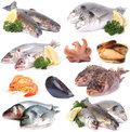 Fresh seafood sea products for every taste Stock Images