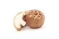 Fresh shiitake mushroom Royalty Free Stock Photo
