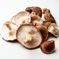 Fresh shiitake mushrooms Royalty Free Stock Photo