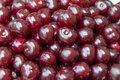 Fresh shiny cherries and dark red Royalty Free Stock Image