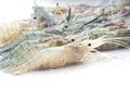 Fresh shrimp Royalty Free Stock Photo