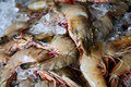 Fresh shrimps close up, background Royalty Free Stock Photos