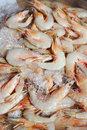 Fresh shrimps close up many on ice in market Royalty Free Stock Photos