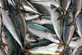 Fresh small fish Stock Photo