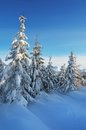 Fresh snow in the forest winter landscape with clean a mountain sunny day a mountain valley Royalty Free Stock Image