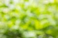 Fresh Soft Green Colour Bokeh ...