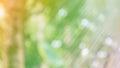 Fresh Soft Nature Green Colour...