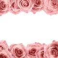 Fresh soft pink rose frame on white background. Wedding background Royalty Free Stock Photo