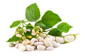 Fresh soy beans Royalty Free Stock Photo