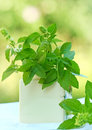 Fresh spice basil herb in a bowl Royalty Free Stock Photos