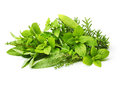 Fresh spices herbs isolated Royalty Free Stock Photo
