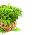 Fresh spicy herbs in basket on white collection of thyme basil oregano parsley marjoram rucola sage and rosemary vertical Stock Photography
