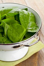 Fresh spinach freshly washed organic leaves in kitchen strainer Royalty Free Stock Image