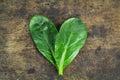 Fresh spinach, high protein
