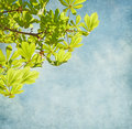 Fresh sprig of   horse chestnut on blue sky. Royalty Free Stock Photo