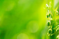 Fresh spring background with a young plant backlit on blurred green bokeh and copyspace Stock Photo