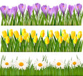 Fresh spring and flower borders Stock Images