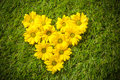 Fresh spring flowers in heart shape on grass natural love Royalty Free Stock Photo