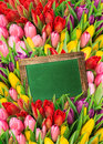 Fresh spring flowers tulips and blackboard with water drops with space for your text Stock Photos