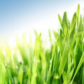 Fresh spring grass Royalty Free Stock Photo