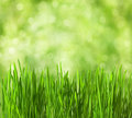 Fresh spring grass Royalty Free Stock Images