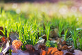 Fresh spring grass in sun light and defocused background Stock Photos