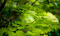 Fresh spring green clone leaves background Stock Photography