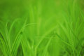 Fresh spring green grass Stock Photography