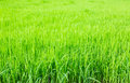 Fresh spring green grass background Stock Photo