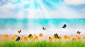 Fresh spring green grass with butterfly and flower near beach, S Royalty Free Stock Photo
