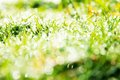 Fresh spring green grass close up image of Royalty Free Stock Photos